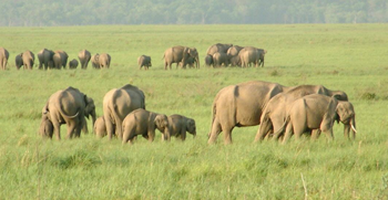 Travel insurance for Jim Corbett National Park