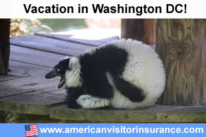 Washington DC travel insurance